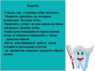 Задачи - - -Узнать, как устроены зубы человека; - Выявить причины, по которы