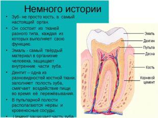 Немного истории Зуб- не просто кость, а самый настоящий орган. Он состоит из