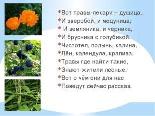 Вот травы-лекари – душица, И зверобой, и медуница, И земляника, и черника, И