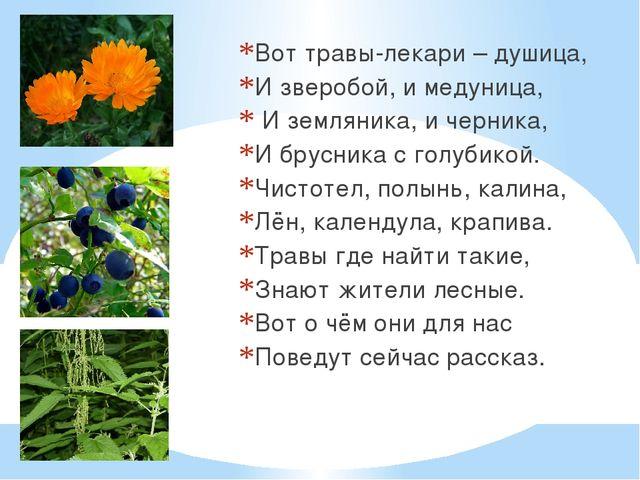 Вот травы-лекари – душица, И зверобой, и медуница, И земляника, и черника, И...