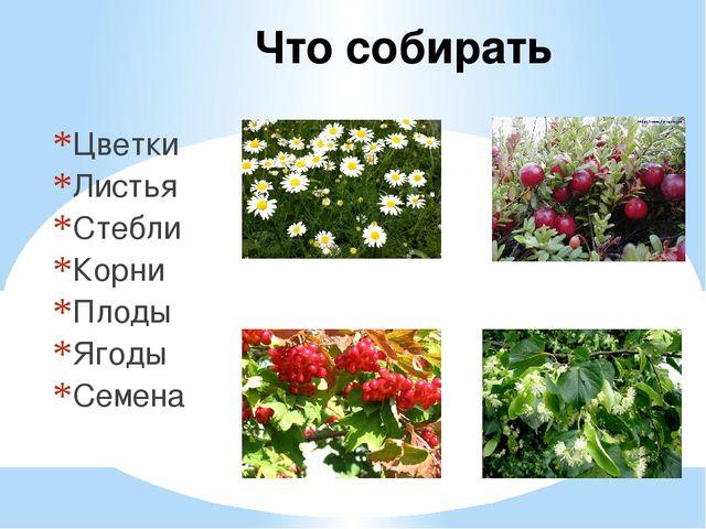 Что собирать Цветки Листья Стебли Корни Плоды Ягоды Семена