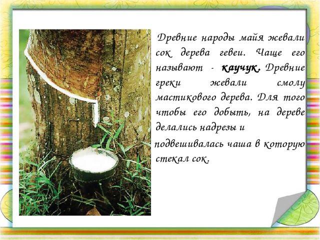 Древние народы майя жевали сок дерева гевеи. Чаще его называют - каучук. Дре...