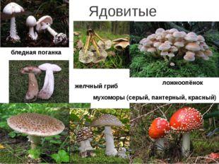 Ядовитые грибы бледная поганка ложноопёнок мухоморы (серый, пантерный, красны