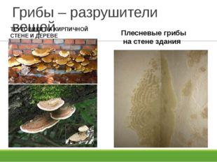 Грибы – разрушители вещей Плесневые грибы на стене здания ТРУТОВИКИ НА КИРПИЧ