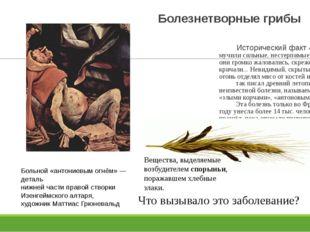 Болезнетворные грибы Исторический факт «Больных мучили сильные, нестерпимые б