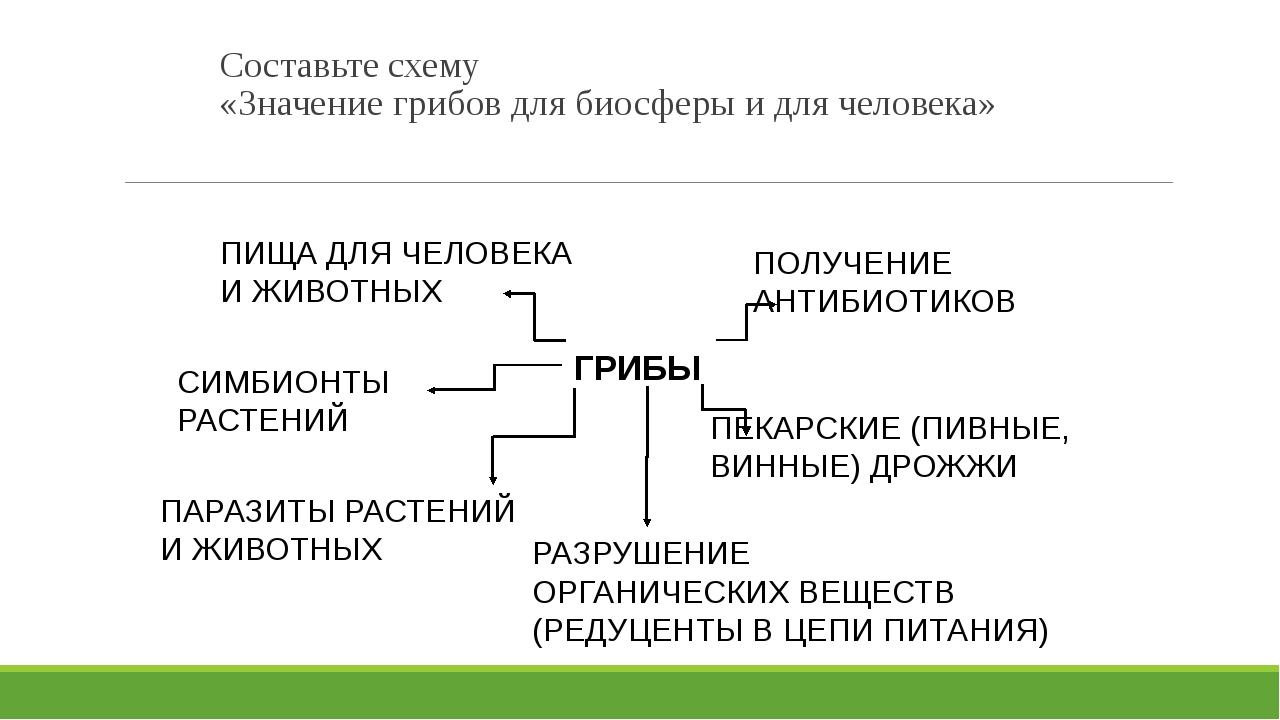 Составьте схему «Значение грибов для биосферы и для человека» ГРИБЫ ПИЩА ДЛЯ...