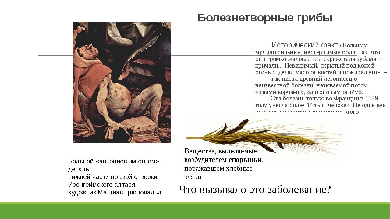 Болезнетворные грибы Исторический факт «Больных мучили сильные, нестерпимые б...