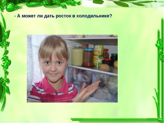 - А может ли дать росток в холодильнике?