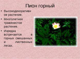 Пион горный Высокодекоративное растение. Многолетнее травянистое растение. Из