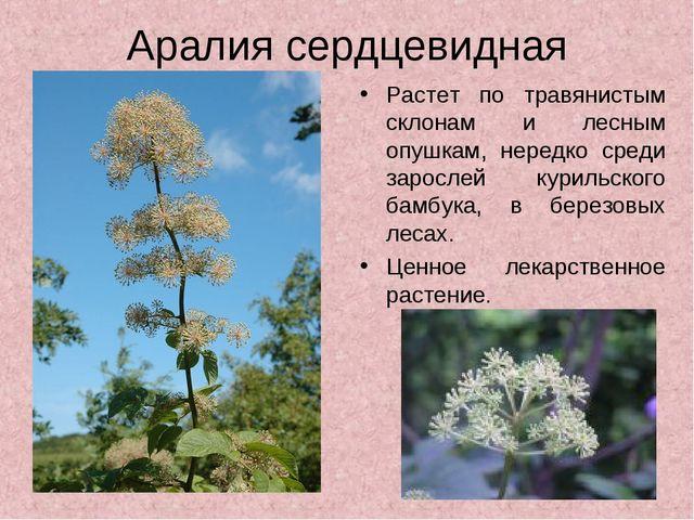 Аралия сердцевидная Растет по травянистым склонам и лесным опушкам, нередко с...