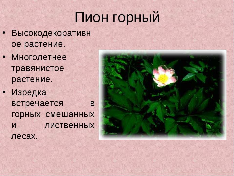 Пион горный Высокодекоративное растение. Многолетнее травянистое растение. Из...