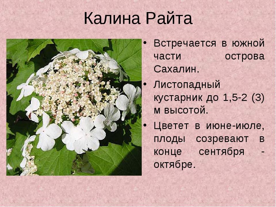Растения красной книги сахалина картинки