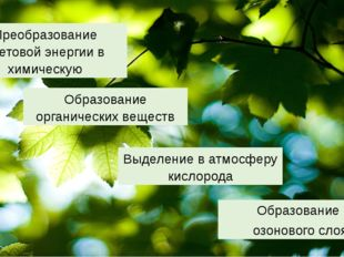 Образование органических веществ Образование озонового слоя Выделение в атмос