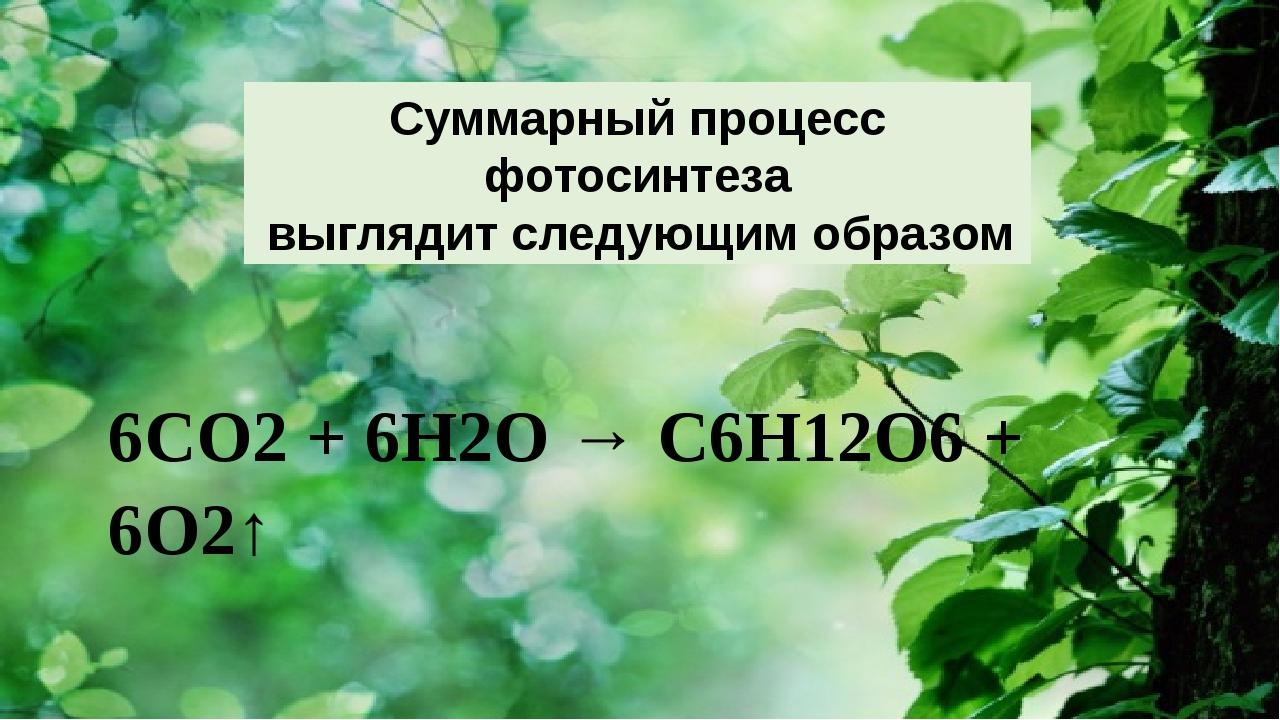 6СО2 + 6Н2О → С6Н12О6 + 6О2↑  Суммарный процесс фотосинтеза выглядит следу...