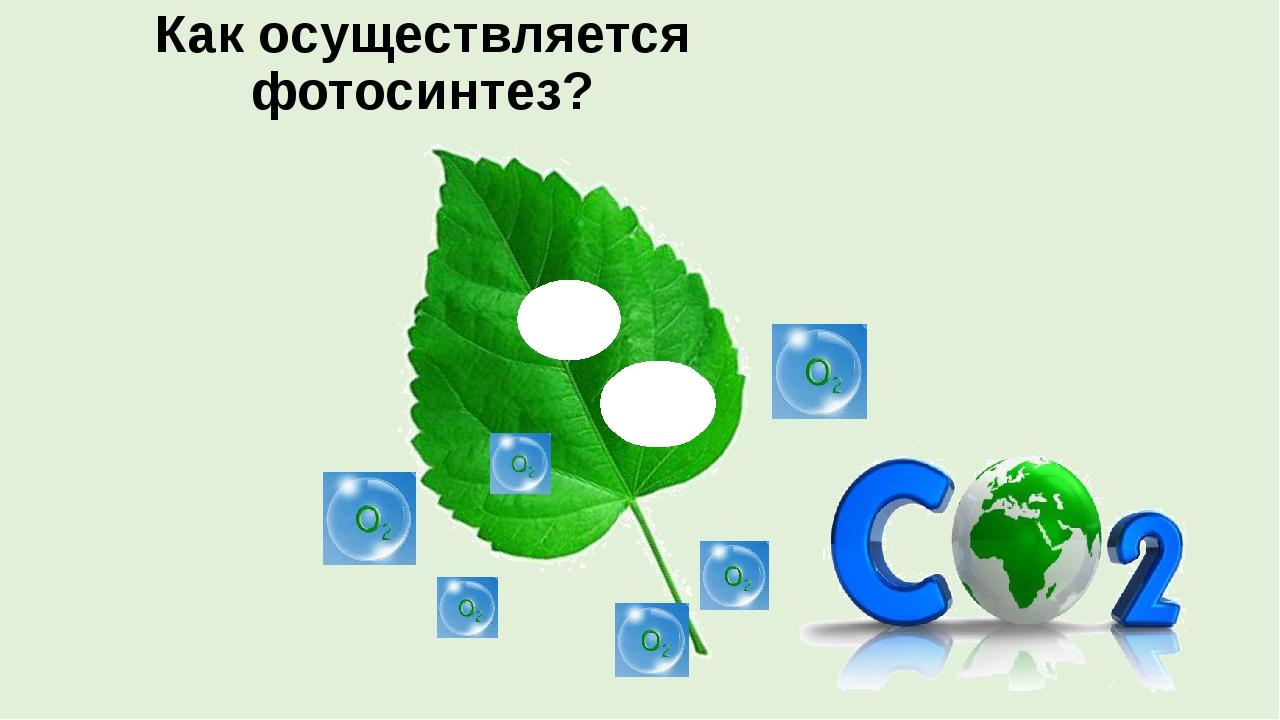 Как осуществляется фотосинтез? сахар крахмал