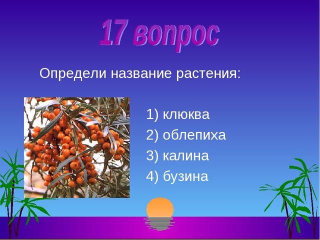 Определи название растения: 1) клюква 2) облепиха 3) калина 4) бузина