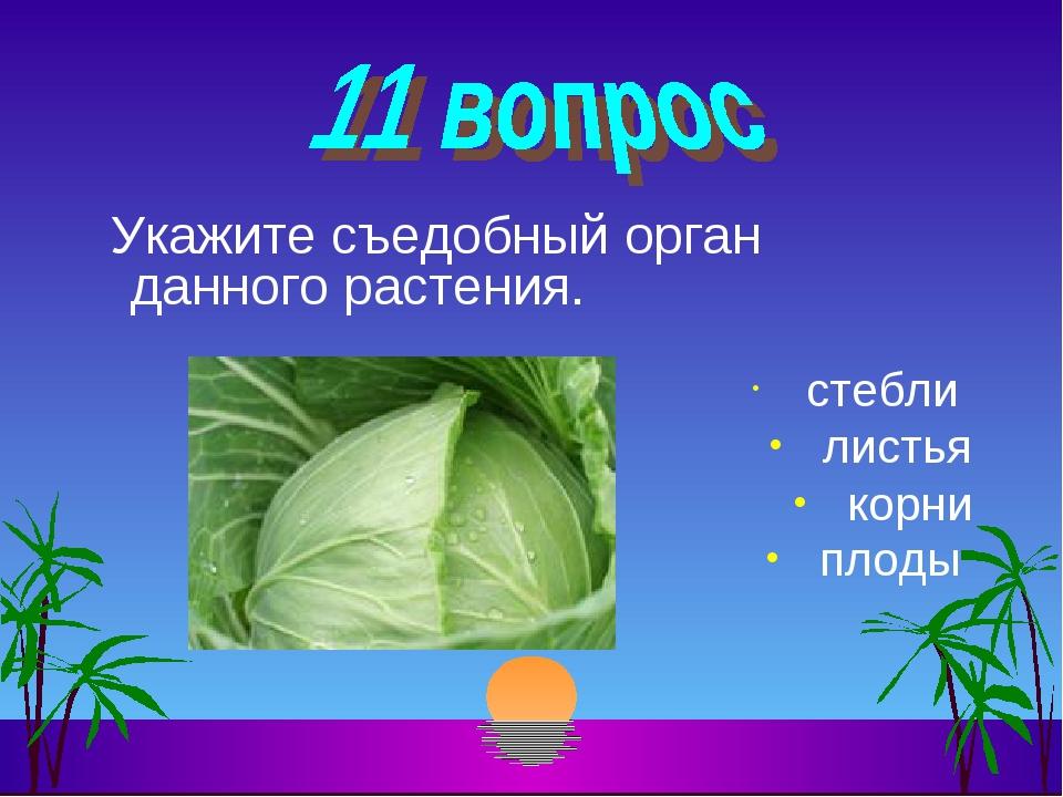 Укажите съедобный орган данного растения. стебли листья корни плоды