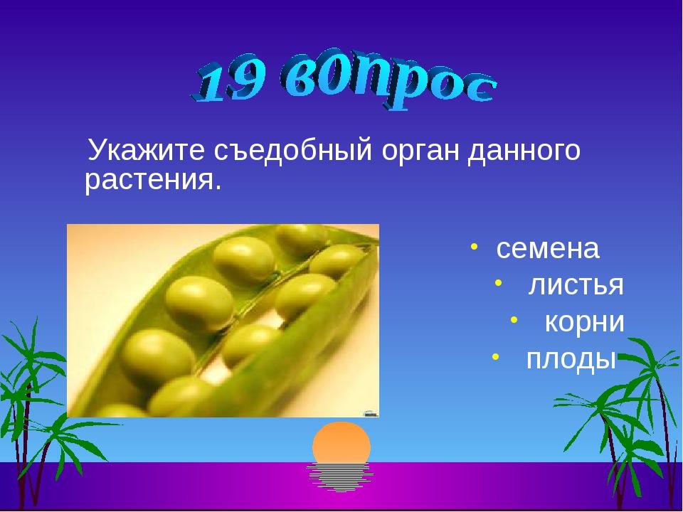 Укажите съедобный орган данного растения. семена листья корни плоды