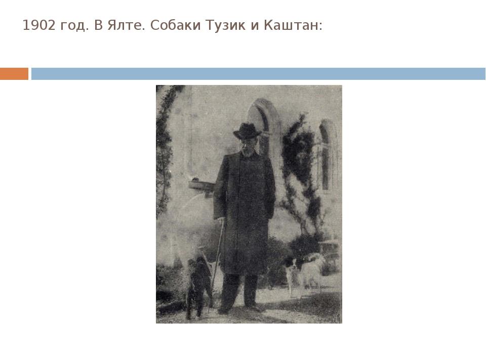 1902 год. В Ялте. Собаки Тузик и Каштан: