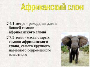4.1метра - рекордная длина бивней самцов африканского слона 7.5тонн - масса