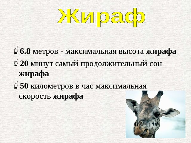 6.8метров - максимальная высота жирафа 20минут самый продолжительный сон жи...