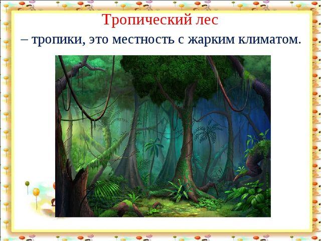 Тропический лес – тропики, это местность с жарким климатом.