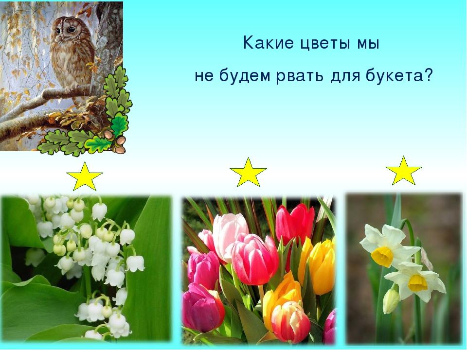 Какие цветы мы не будем рвать для букета?