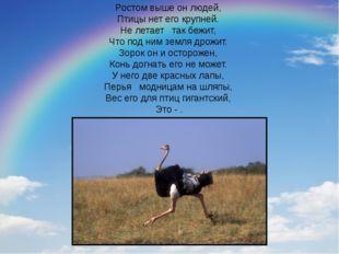 Ростом выше он людей, Птицы нет его крупней. Не летает так бежит, Что по