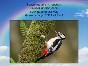 Все деревья с интересом Изучает доктор леса. Если дерево ест жук, Доктор сраз