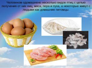 Человеком одомашнено несколько видов птиц с целью получения от них яиц, мяса,