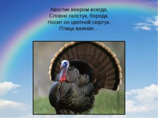 Хвостик веером всегда, Словно галстук, борода. Носит он цветной сюртук. Птица