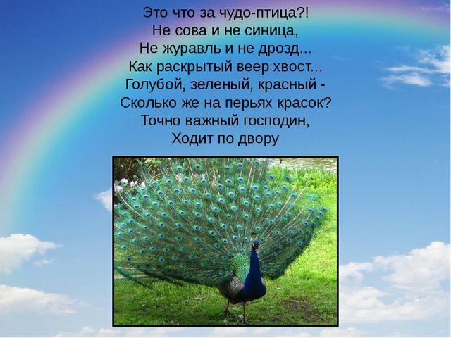 Это что за чудо-птица?! Не сова и не синица, Не журавль и не дрозд... Как рас...