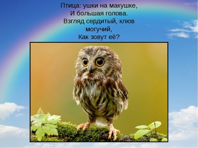 Птица: ушки на макушке, И большая голова. Взгляд сердитый, клюв могучий, Как...