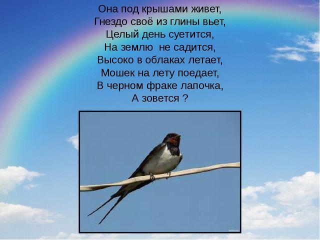 Она под крышами живет, Гнездо своё из глины вьет, Целый день суетится, На зем...