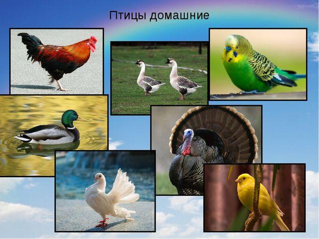 Птицы домашние