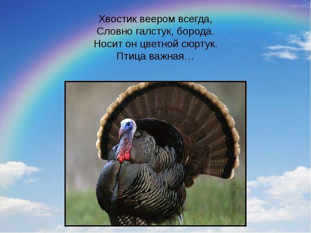Хвостик веером всегда, Словно галстук, борода. Носит он цветной сюртук. Птица...