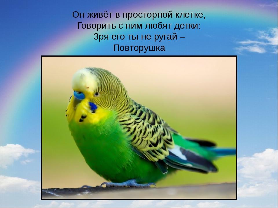 Он живёт в просторной клетке, Говорить с ним любят детки: Зря его ты не ругай...