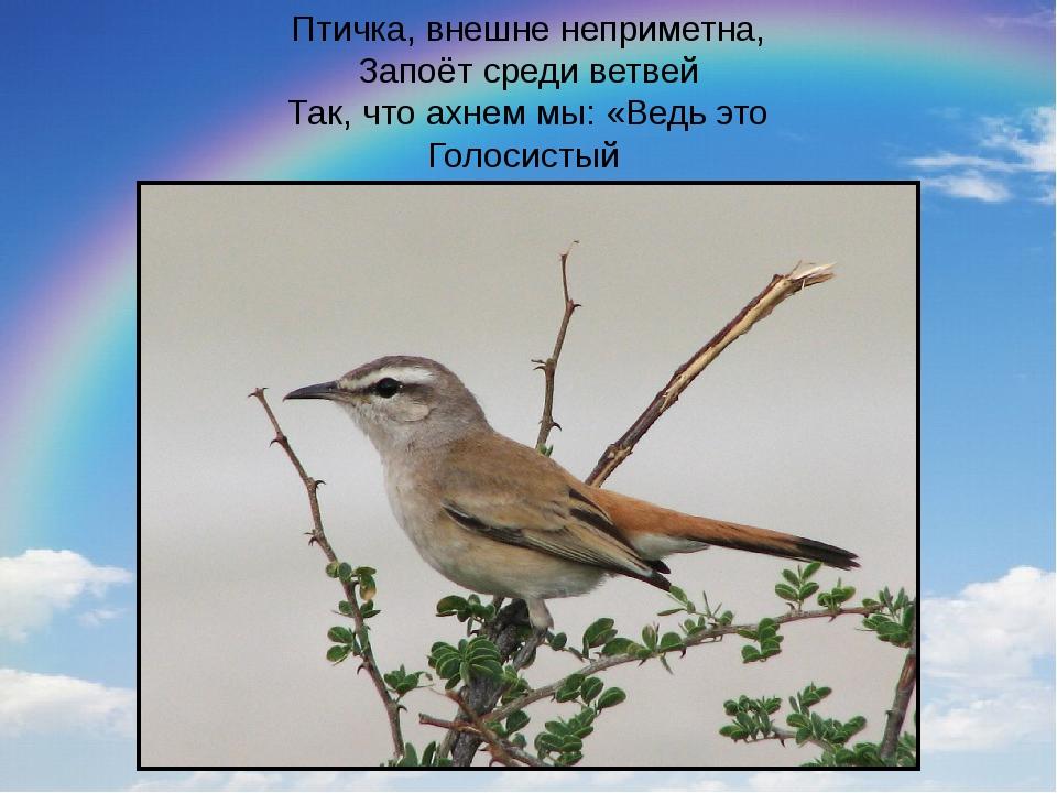 Птичка, внешне неприметна, Запоёт среди ветвей Так, что ахнем мы: «Ведь это Г...