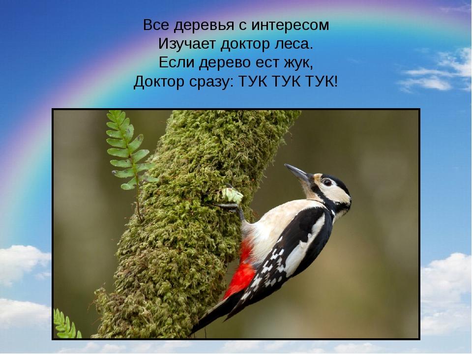 Все деревья с интересом Изучает доктор леса. Если дерево ест жук, Доктор сраз...
