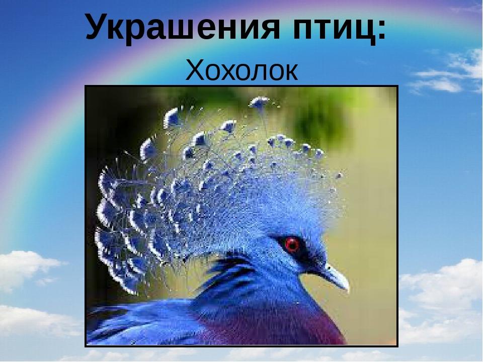 Украшения птиц: Хохолок
