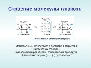 Строение молекулы глюкозы Моносахариды существуют в растворе в открытой и цик