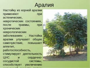 Аралия Настойку из корней аралии применяют при астенических, невротических со