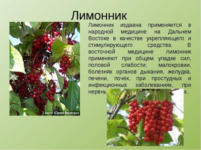 Лимонник Лимонник издавна применяется в народной медицине на Дальнем Востоке...