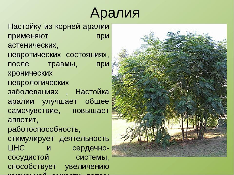 Аралия Настойку из корней аралии применяют при астенических, невротических со...