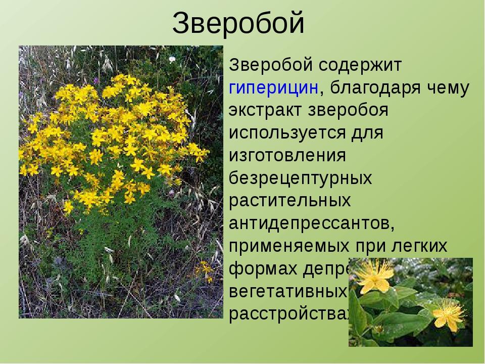 Зверобой Зверобой содержит гиперицин, благодаря чему экстракт зверобоя исполь...
