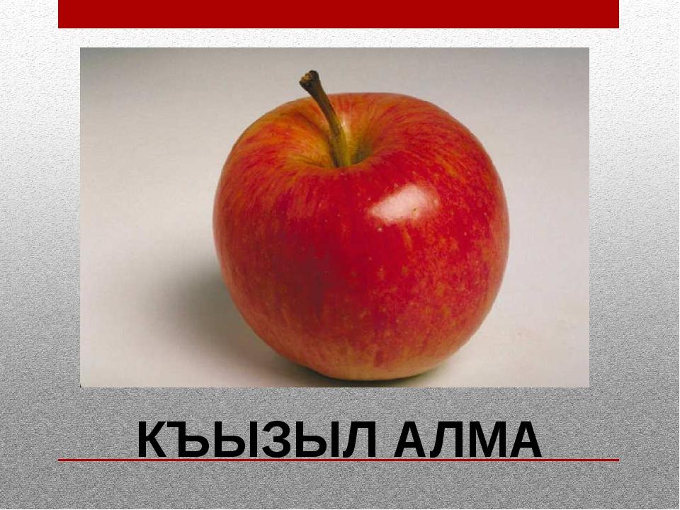 КЪЫЗЫЛ АЛМА