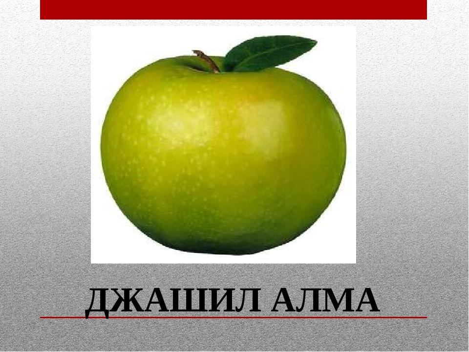 ДЖАШИЛ АЛМА