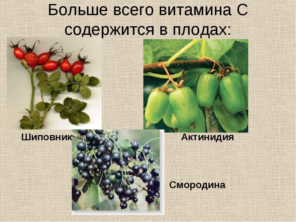 Больше всего витамина С содержится в плодах: Шиповник Актинидия Смородина