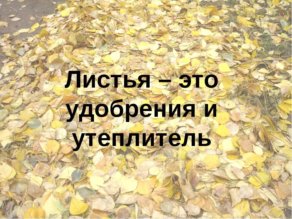 Листья – это удобрения и утеплитель