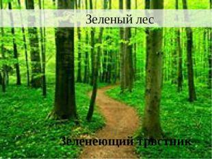 Зеленый лес Зеленеющий тростник